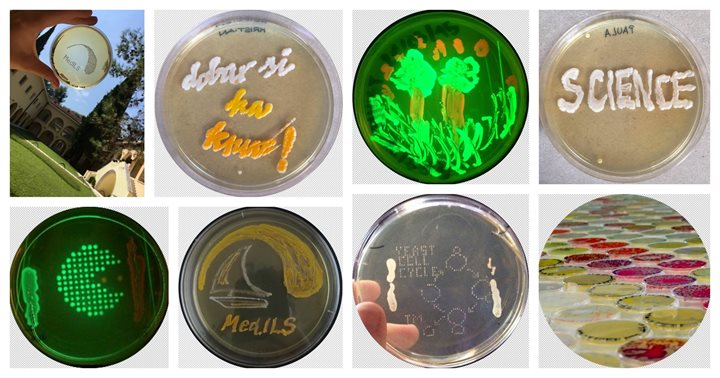 MICROBES OF MedILS